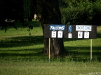 falcons_24